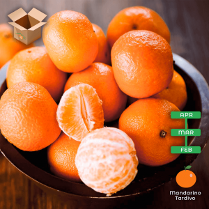 amandarini tardivi - arancia mia