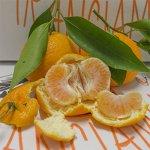 Pacco 16.5 Kg di Mandarini Primosole