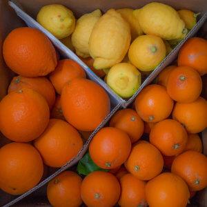 misto agrumi - arancia mia