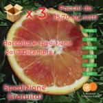 50 kg Arance Tarocco Gallo IGP cal.5 diam:73-84mm (3x16,67kg)