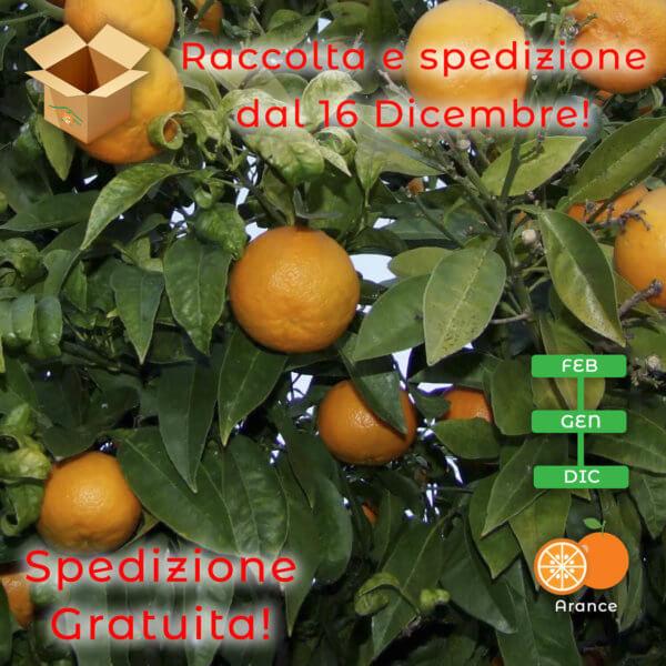 Arance amare naturali - arancia mia