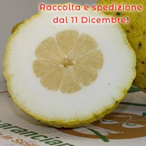 cedri siciliani - arancia mia
