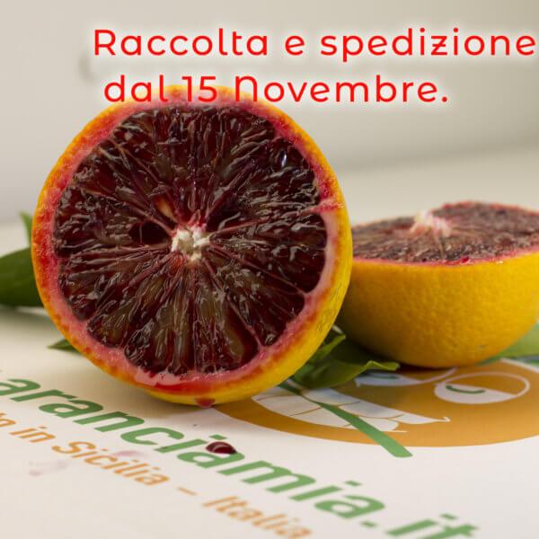 L'AranciaMia® - arancia mia