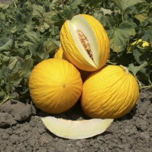 Melone Gialletto - Arancia Mia