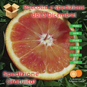 Arance Tarocco IGP cal.5 - Arancia Mia