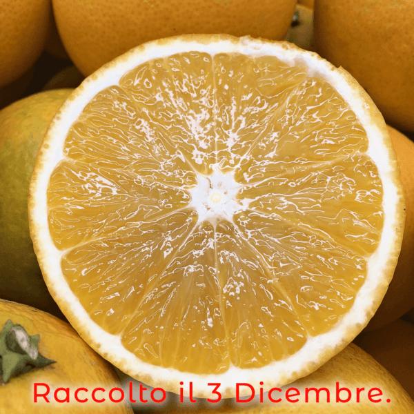arancia tagliata dicembre - Arancia Mia