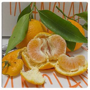 clementine primosole - Arancia Mia