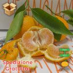 Pacco 15 Kg Clementine Primosole