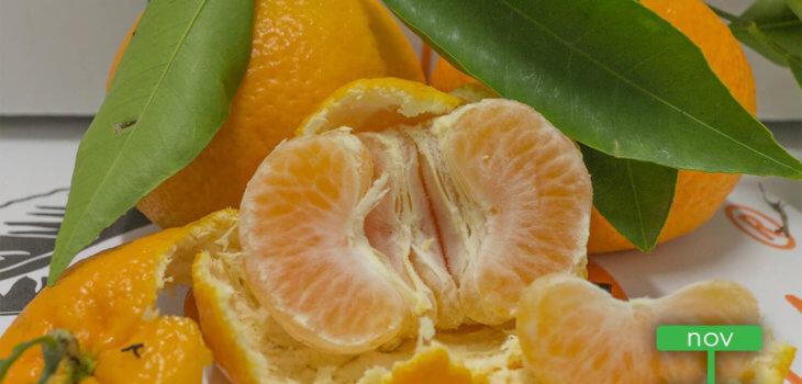 clementine primosole - AranciaMia
