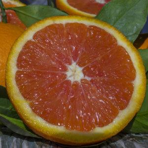 navelina a polpa rossa - Arancia Mia