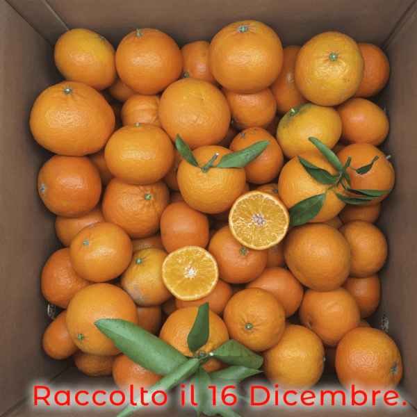 scatola clementine nova - arancia mia