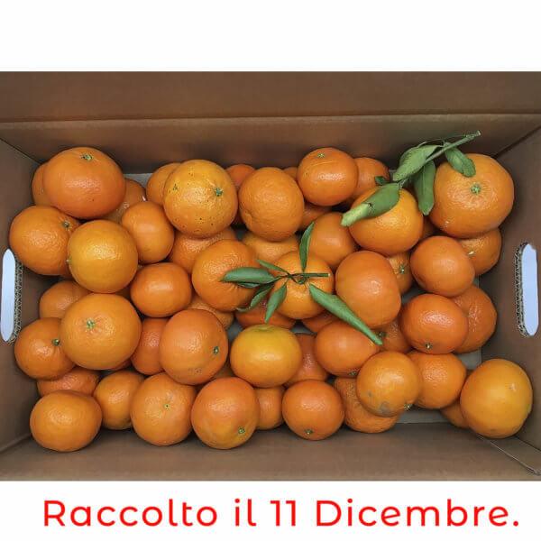 scatola clementine nova 8- arancia mia
