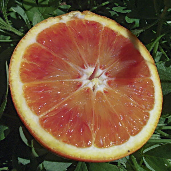 arance tarocco gallo - Arancia Mia